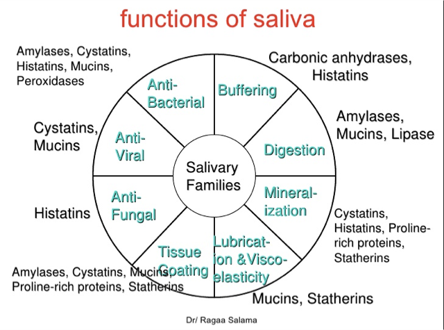 The Important Role Of Saliva In Oral Health
