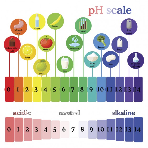 A diagram of a pH scale, showing the acid-base balance.